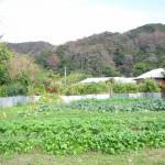 奄美大島にある「ちゃんこ奄美直営農場」に行ってきました!